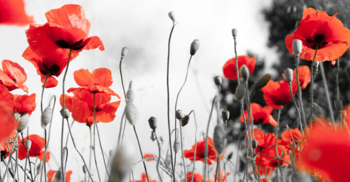 ANZAC Day arrangements for 2021 in Victoria preview image